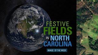 Festive Fields in North Carolina