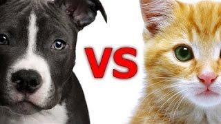 개와 고양이 사이의 재미있는 비교 - 재미있는 동물 컴파일