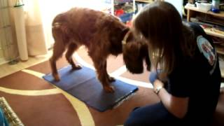 Wipe Your Paws And Clean Your Feet Dog Trick With Brandy
