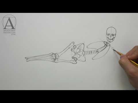 Anatomy of the Body - Anatomy Lesson for Artists