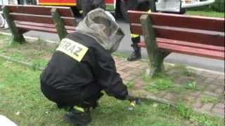 Osy kontra strażacy