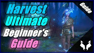 Path Of Exile Harvest's Ultimate Beginner's Guide - Explaining Everything + Building T4 Farms