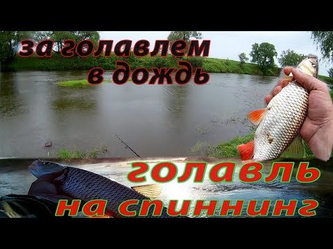 Рыбалка в дождь на перекате Ловля голавля на спиннинг