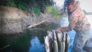 ВОТ ЭТО АСТРАХАНЬ ЭТИ КОРЯГИ ПРОДОЛЖАЮТ РАДОВАТЬ Рыбалка на спиннинг Ловля щуки судака