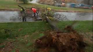 Sandy: Police clear tree in Arlington, VA