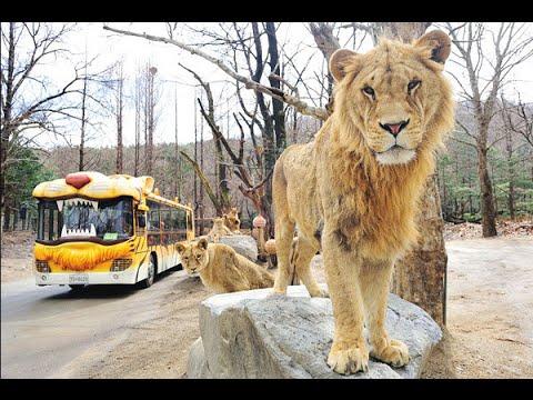 에버랜드 사파리월드/Everland  Safari World/한국여행/korea trip
