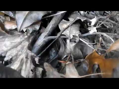 Dino Lives Episode 4 Baryonyx