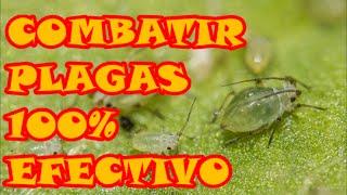 control de plagas método 100 efectivo natural preventivo y curativo