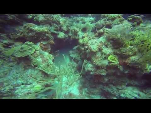 Grand Turk Diving 8:8:14