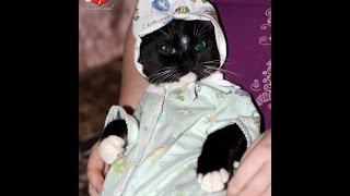 Кот вернулся спустя 3 недели блуда