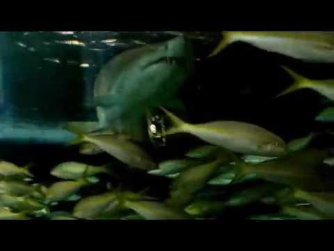 Ripley's Aquarium Downtown Toronto, Canada