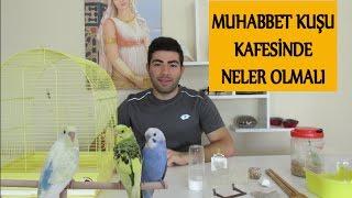 Muhabbet Kuşu Kafesinde Neler Olmalı | Kafes Düzeni
