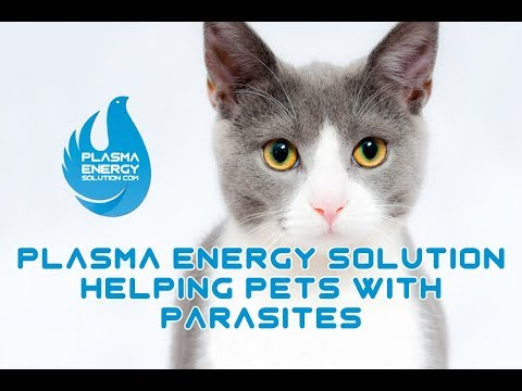 Plasma Energy Solution Pets With Parasites