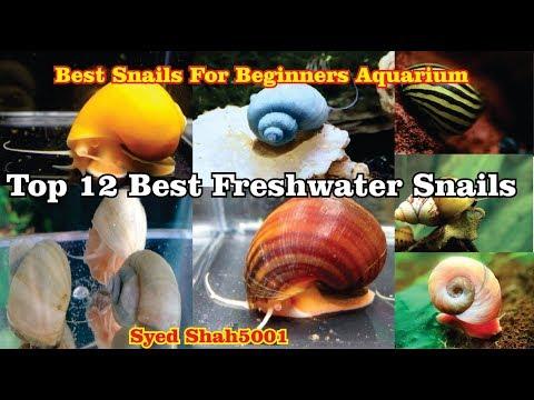 Types OfAquarium Snails TOP 12 SNAILS For Beginners #Aquarium Snails