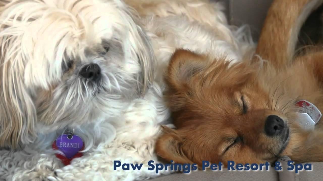 Dog Boarding Okotoks High River Paw Springs Pet Resort & Spa Ltd AB