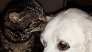 В сети нашли кота, который вырос с собакой, теперь он думает, что он собака