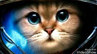 Кошка Беспородная