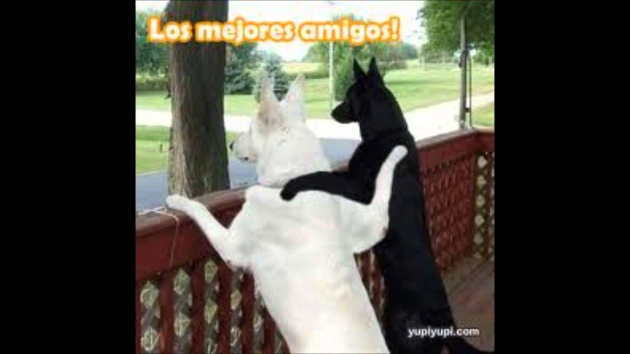 Imagenes Chistosas De Perros