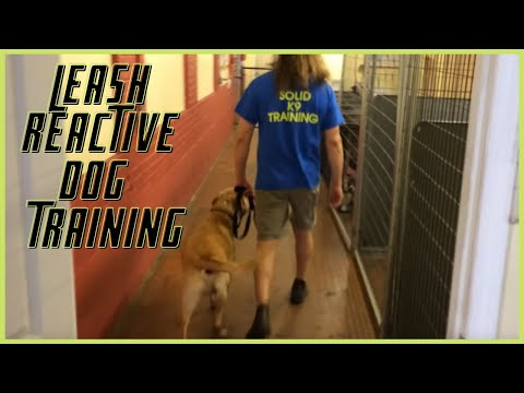Leash Reactive Dog How To Dog Training