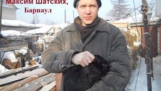 Как правильно поднимать кролика (видео)(Как правильно поднимать кролика, знает сайт moy-krolik.ru! Переходите на наш сайт, там много интересного про кроли..., 2015-01-30T12:25:11.000Z)