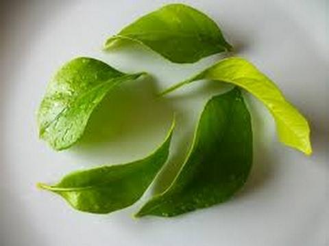 Te de hojas de limon para adelgazar
