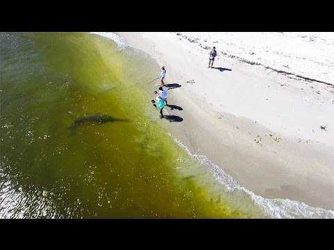 Thumbnail: Giant RARE Fish Landed From The Beach