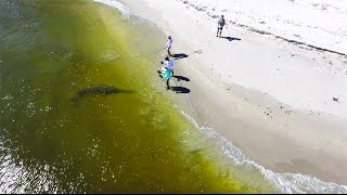 One of Jon B.'s most viewed videos: Giant RARE Fish Landed From The Beach
