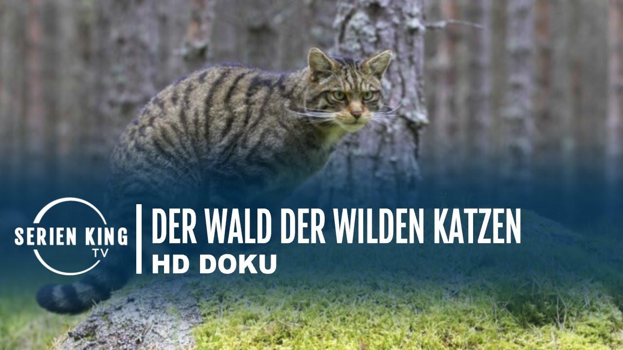 Doku Katzen