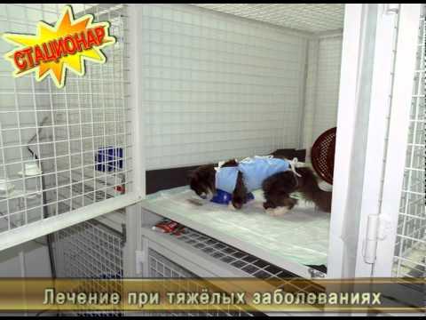 Детская стоматологическая поликлиника великий новгород псковская