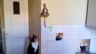 Копия видео Кошка звонит в колокол