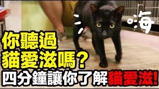 黃阿瑪的後宮生活-關於貓愛滋你了解多少? 後宮好朋友,愛滋猫小黑(已找到領養者)