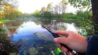 Рыбалка на БОЛОТЕ Ищем щуку на жабовнике а окуня на лесном карьере Рыбалка на спиннинг летом