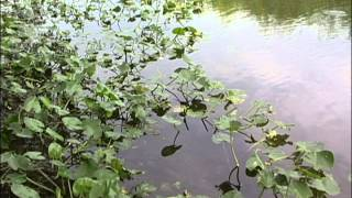 Aquatic Plants: Identification