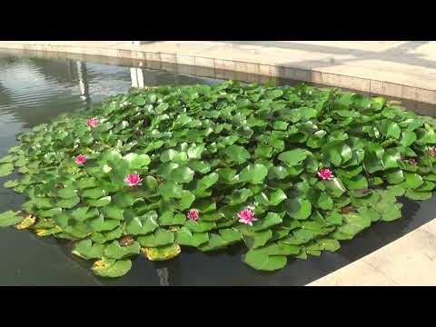 QingDao Park छिंगताव 2017 8 24