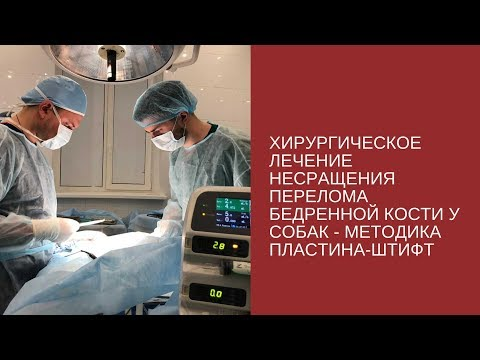 Хирургическое лечение несращения бедренной кости у собак