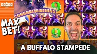 🐃 STAMPEDE!!! 🐃 MAX BET w/ Buffalo Max 🌞 BCSlots