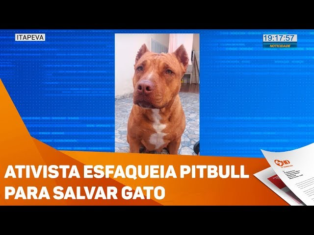 Ativista esfaqueia pitbull para salvar gato - TV SOROCABA/SBT