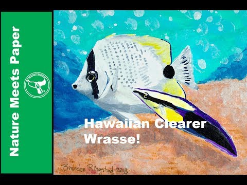 Hawaiian Cleaner Wrasse - 3:21 - Nature Meets Paper