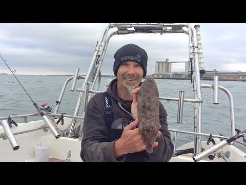 Sole Fishing Southampton Water Southcoast United Kingdom