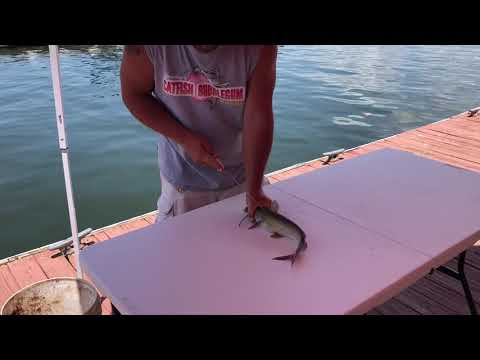 How to clean catfish