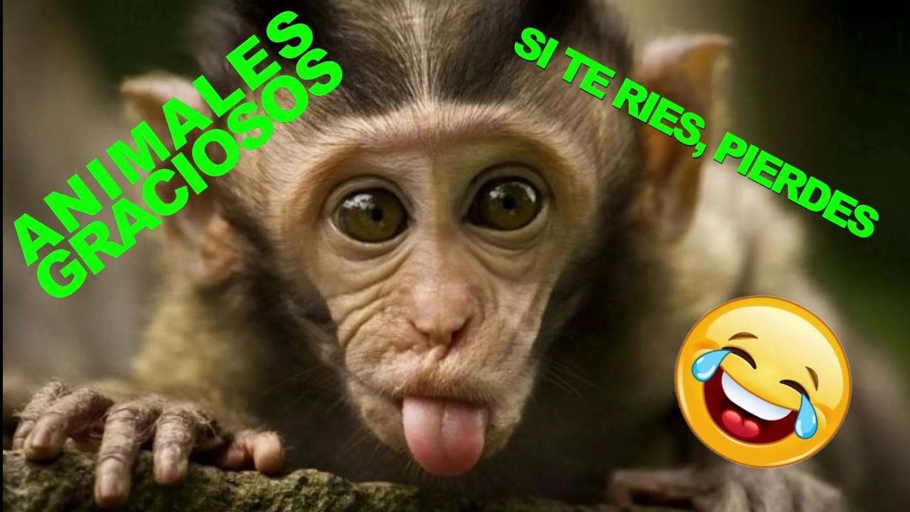 Si Te Ríes Pierdes Animales Monos Graciosos Video 2017 Videos