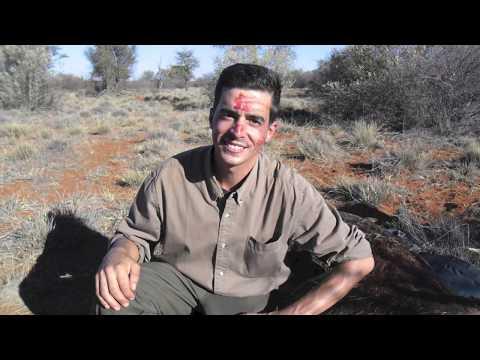 Kalahari Sudafrica 2013 hunt
