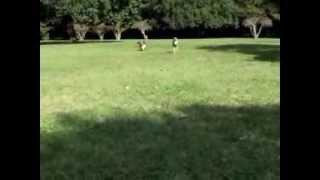 2013年10月。ワンコ友達と公園に行きました。 足の長さの違う2ワンの呼...