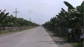 Cavendish Banana Plantation Sto. Tomas Davao Del Norte