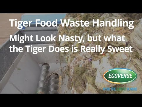 Tiger Turns Food Waste into Gold