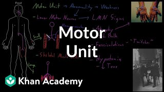 Motor unit | Organ Systems | MCAT | Khan Academy