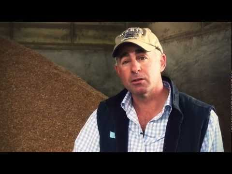 Cattle Nutrition At Australian Feedlots