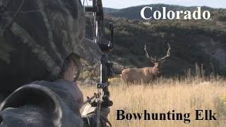 Lady Arrows Elk in Colorado  PERFECT SHOT! How to spot and stalk Elk out west with Archery