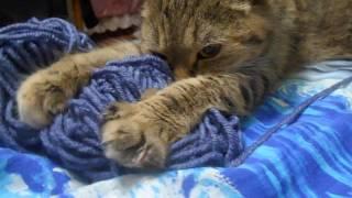 Кошка Ромашка- массажистка!