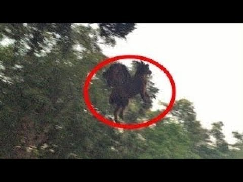5 TIMES THE JERSEY DEVIL WAS CAUGHT ON VIDEO!